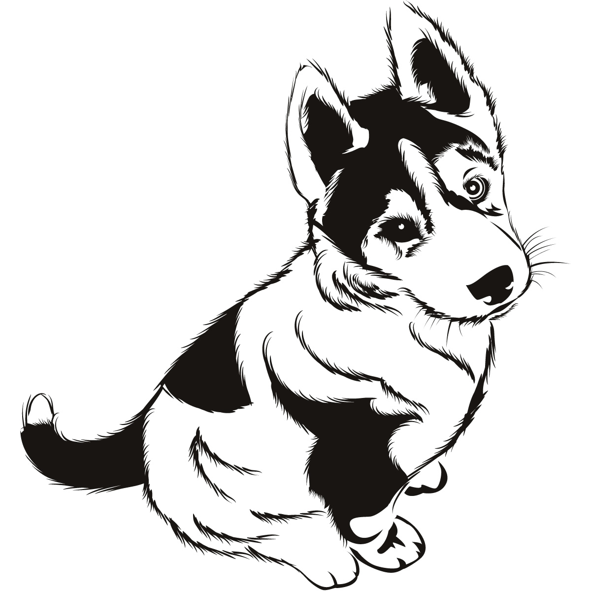 Pics for husky puppy outline for Husky puppy coloring pages